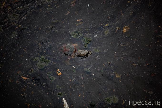 Аргентинская Риачуэло - самая грязная речка на планете (7 фото)