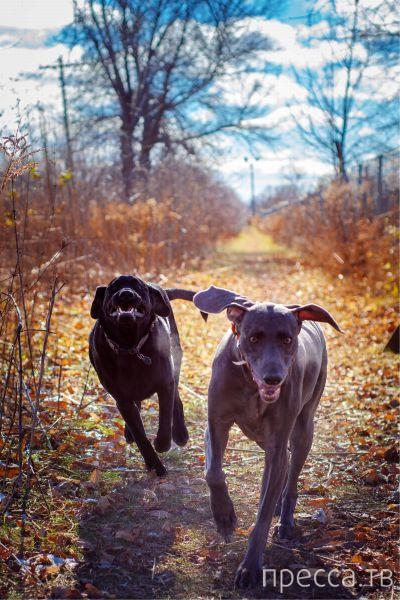 Милые и забавные животные, часть 107 (44 фото)