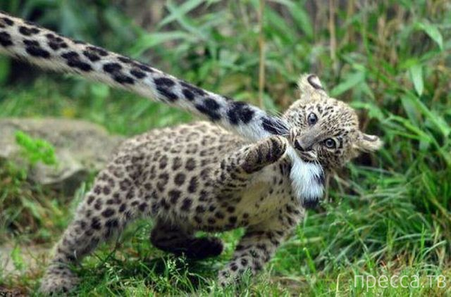 Милые и забавные животные, часть 109 (41 фото)