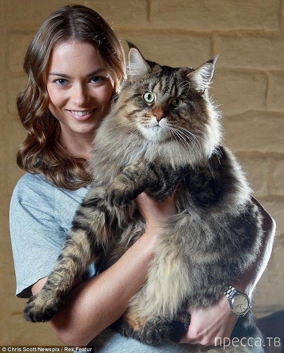Самый большой кот в мире (4 фото)