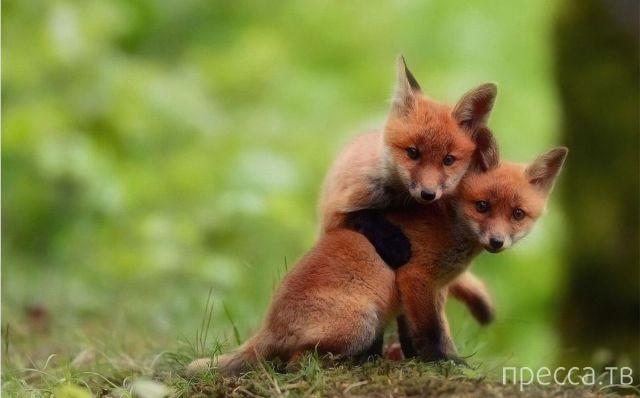 Милые и забавные животные, часть 111 (44 фото)