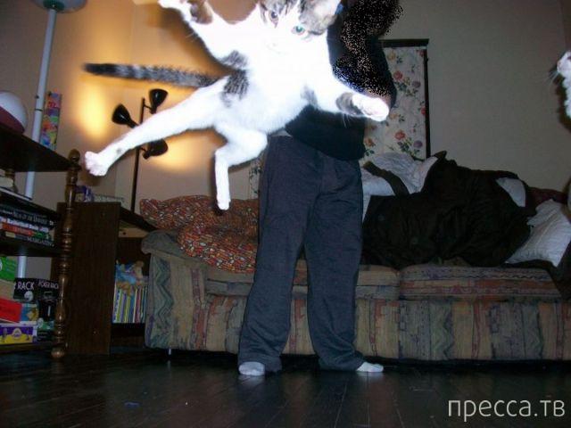Милые и забавные животные, часть 112 (40 фото)