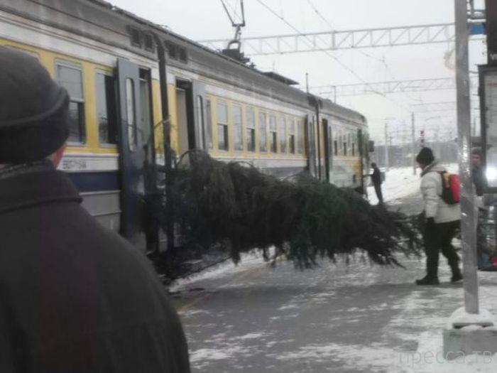 Прикольные зимние фотографии (53 фото)
