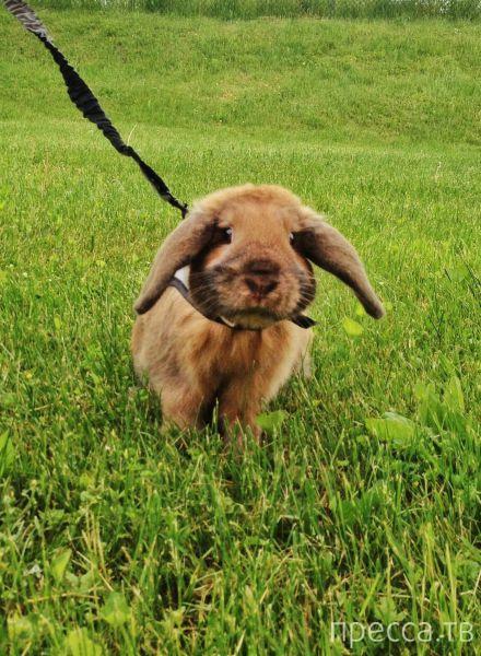 Милые и забавные животные, часть 113 (38 фото)