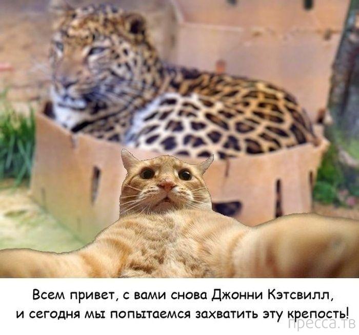 Джонни Кэтсвилл - новый прикольный интернет-мем (42 фото)