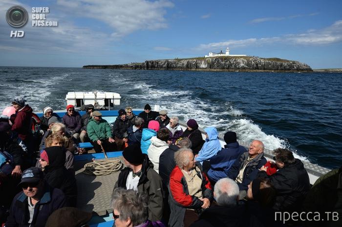 Путешествие на острова Фарне (26 фото)