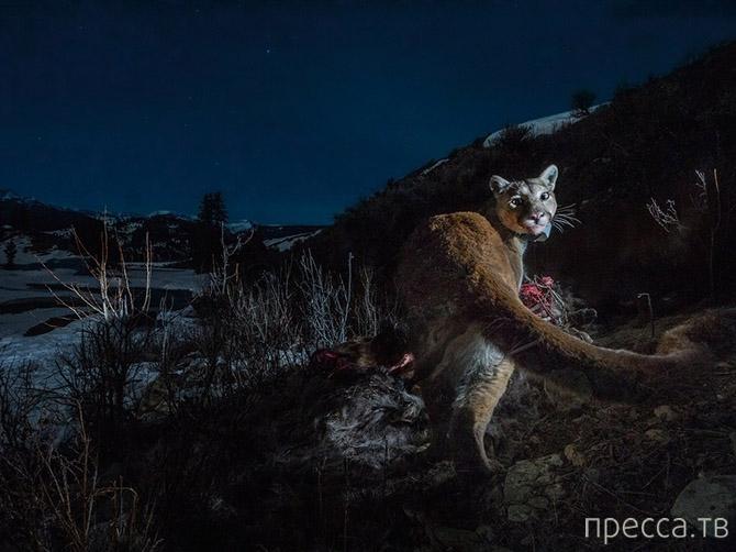 Лучшие фотографии National Geographic января 2014 года (20 фото)