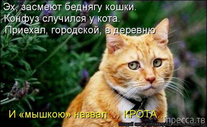 Прикольные котоматрицы, часть 8 (50 фото)