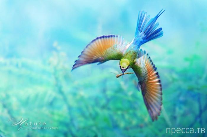 Удивительные снимки дикой природы Таиланда от фотограф Sompob Sasi-Smit (23 фото)