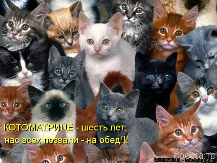 Прикольные котоматрицы, часть 9 (47 фото)