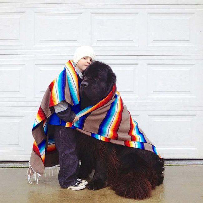 Собака - самый преданный друг (20 фото)