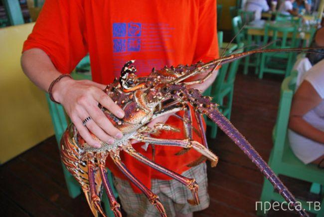 Экзотический камбоджийский фаст-фуд (10 фото)