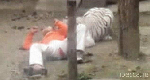 Китаец предложил себя тиграм в качестве еды (4 фото)