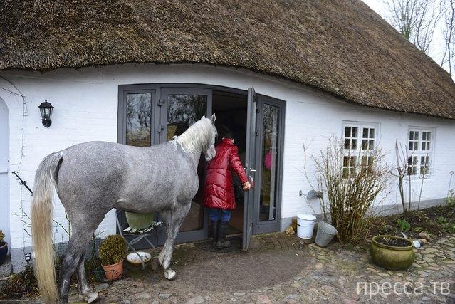 Доктора Стефани Арндт из Германии держит лошадь дома (16 фото)