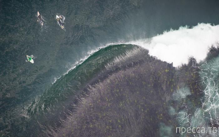 Езда серферов по большим волнам Ботани-Бей (13 фото)