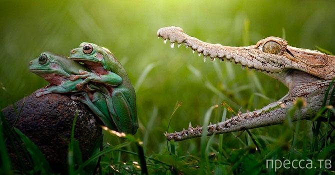 Фотографии забавных животных из разных стран мира (20 фото)