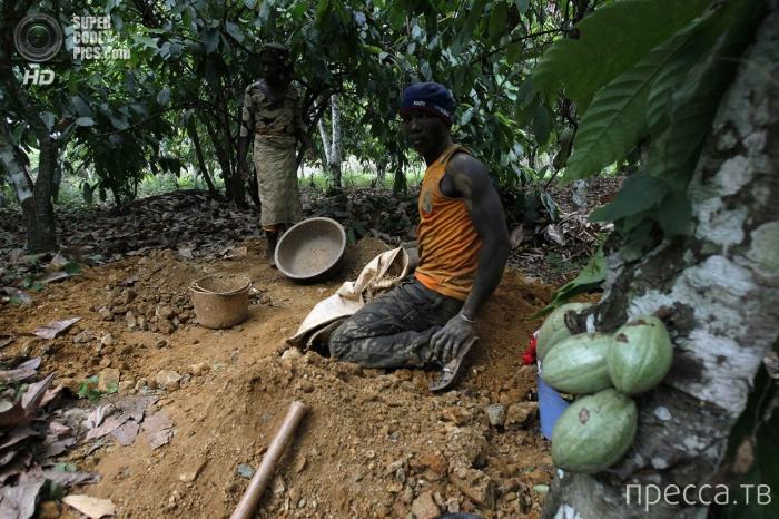 Золотая лихорадка на Кот-ДИвуар и Гана (15 фото)