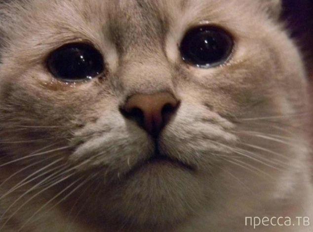 Забавные грустные котики (14 фото)