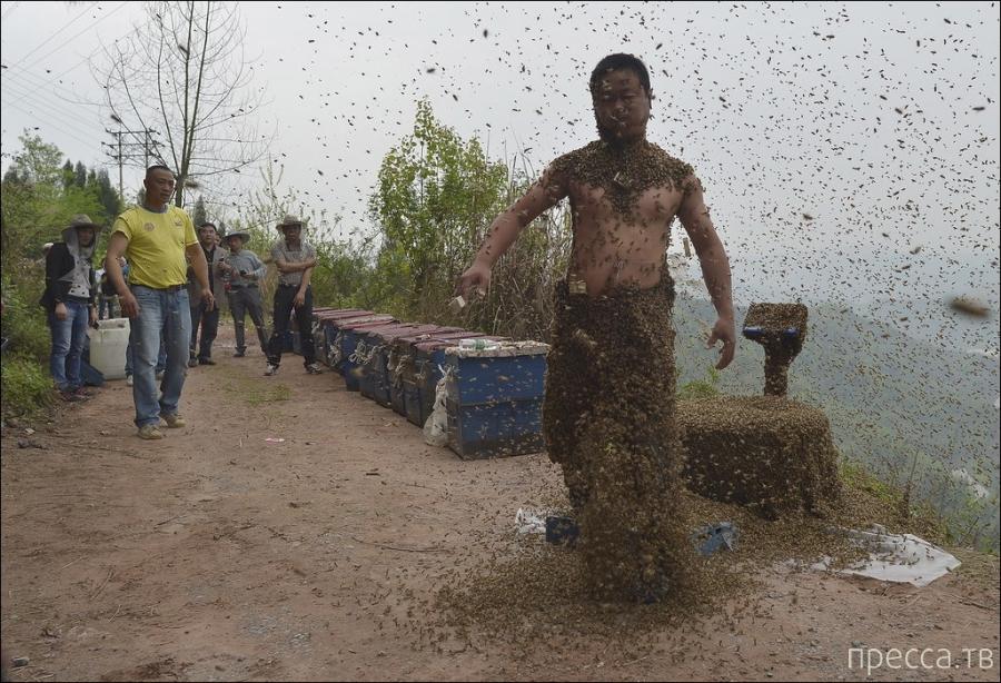 Рекорд китайского пчеловода (12 фото)