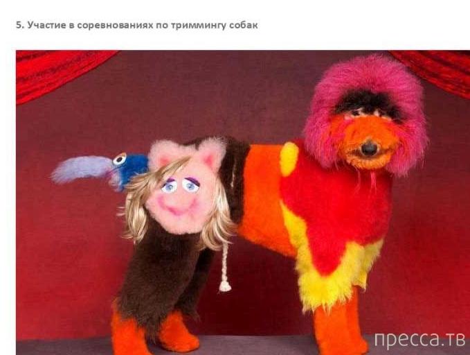 Топ 7: Самые странные хобби в мире (23 фото)