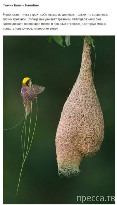 Топ 9: Самые необычные жилища животных и насекомых (10 фото)