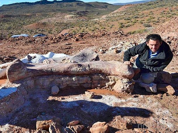 В Аргентине нашли кости самого большого животного на Земле (5 фото)