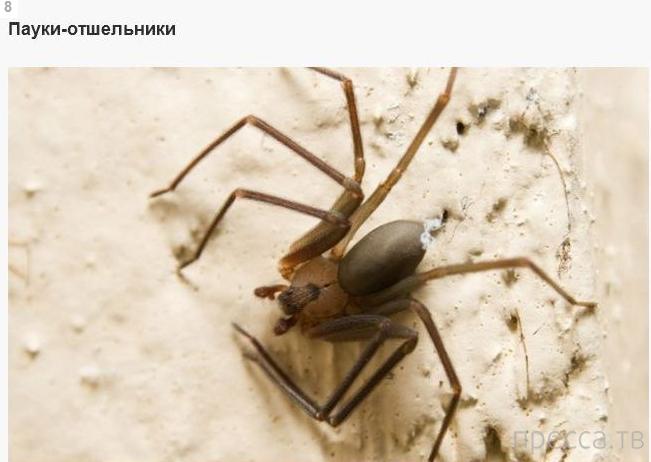 Топ 8: Самые опасные создания, которые могут испортить вам отпуск (8 фото)