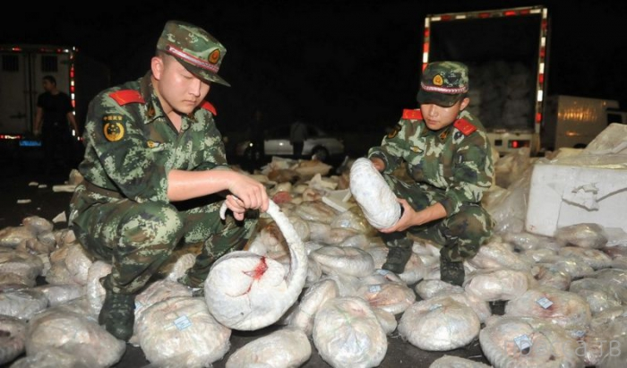 Контрабандисты пытались провезти через китайскую границу 956 замороженных панголинов (9 фото)