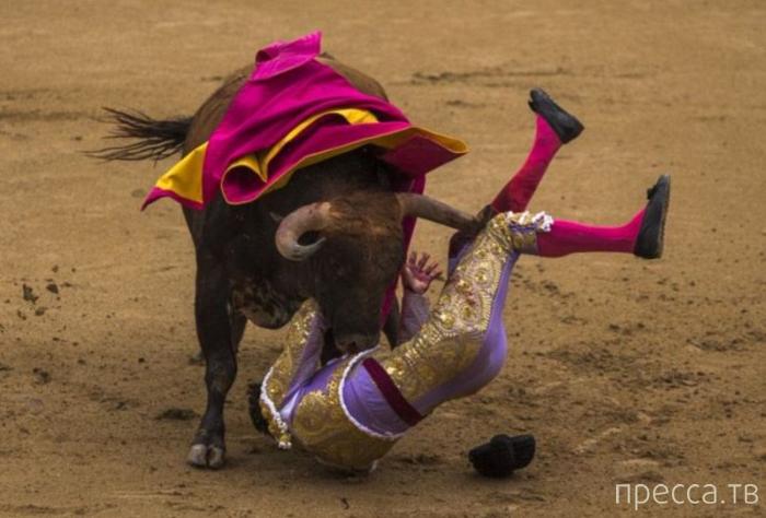 Неудачная испанская коррида - 2014 (10 фото)
