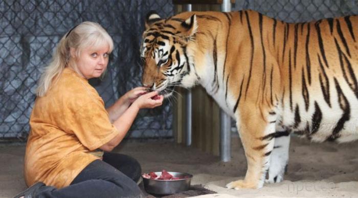 57-летняя Джанис Хэйли - мать тигров (11 фото)