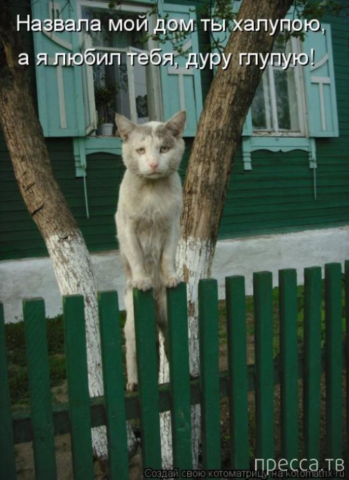 Лучшие котоматрицы недели, часть 7 (50 фото)