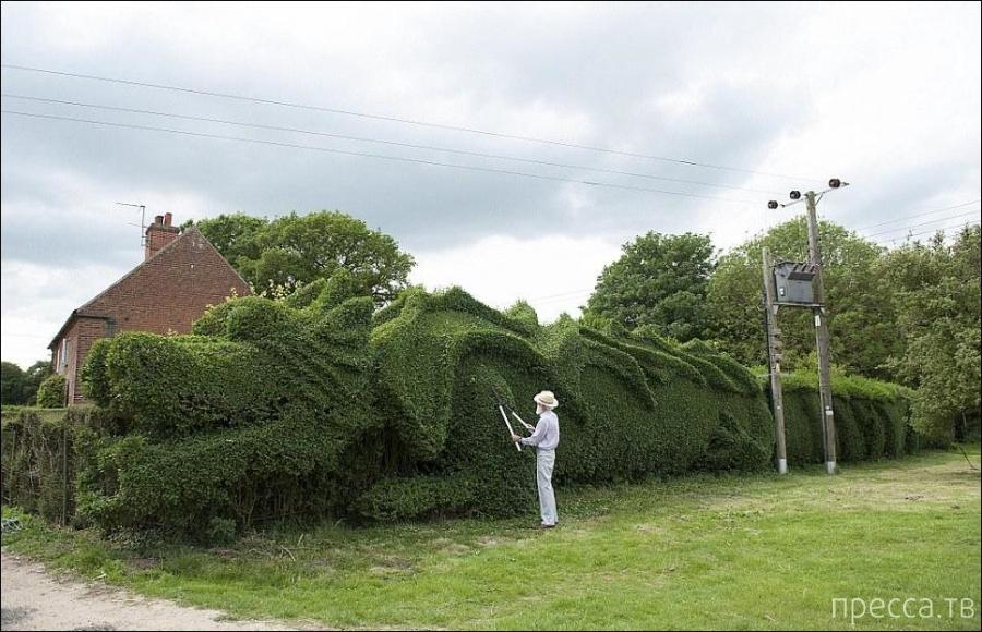 Живая изгородь в форме дракона в Норфолке (Австралия) (5 фото)