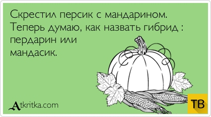 """Прикольные """"Аткрытки"""" (29 фото)"""