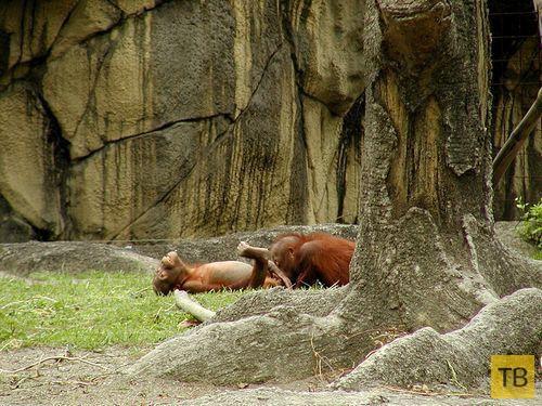 (18+) Почему опасно водить детей в зоопарк (8 фото)