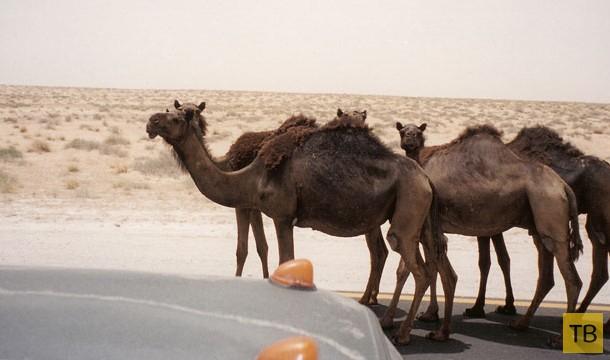 Самые нелепые правила дорожного движения разных стран мира (13 фото)
