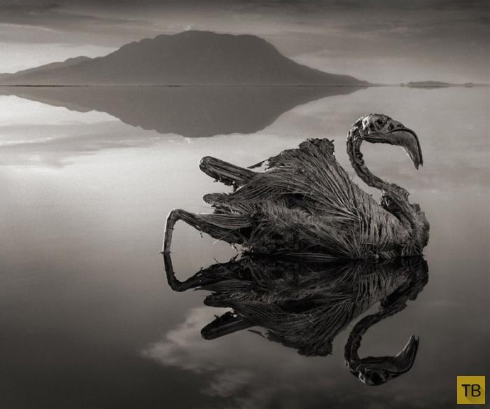 Уникальное озеро в Танзании (10 фото)