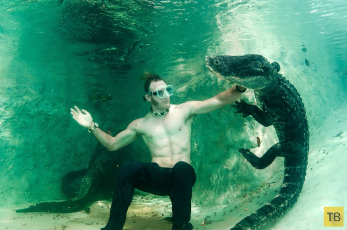 Спасатели аллигаторов (14 фото)