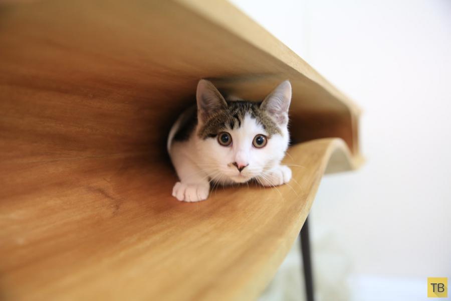 Оригинальный компьютерный стол CATable, в котором есть место для вашего кота (7 фото)