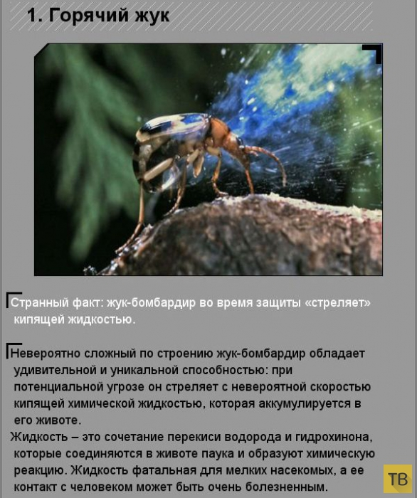 Удивительные факты о необычных созданиях природы (10 фото)