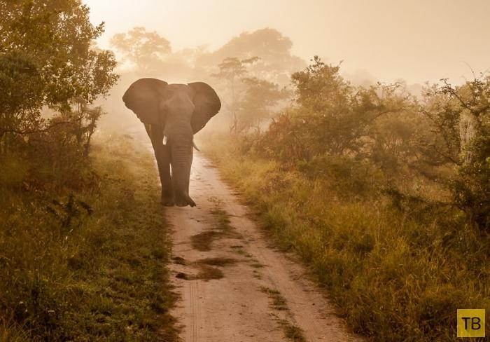 Африка в фотографиях Жако Маркса (20 фото)