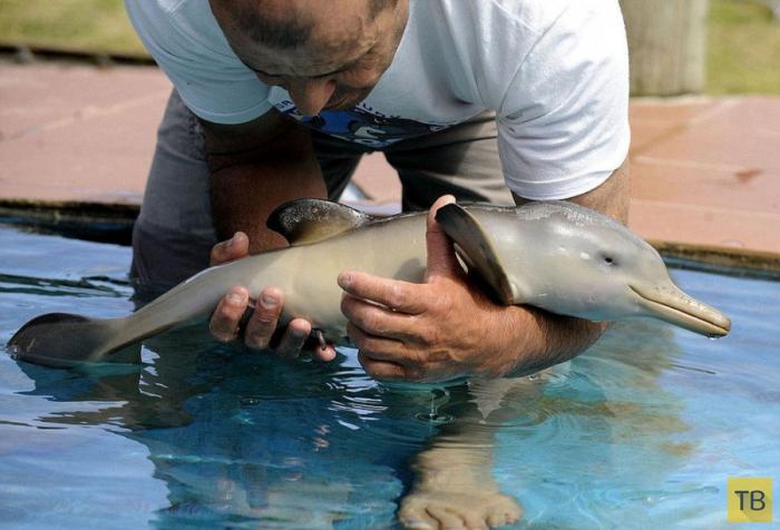 Спасенный детеныш дельфина (10 фото)