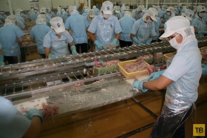 Как во Вьетнаме выращивают рыбу (28 фото)
