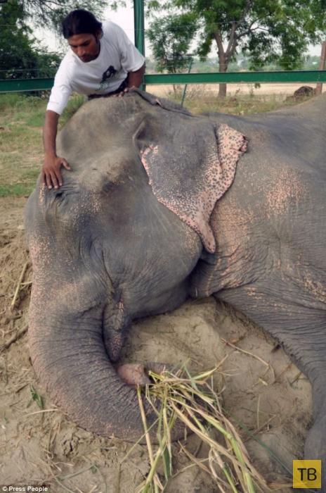 Реакция слона на освобождение (5 фото)