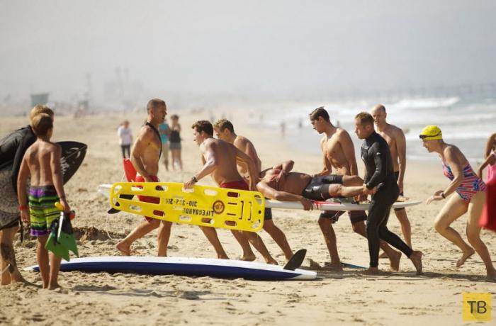 Большая белая акула напала на пловца (8 фото)