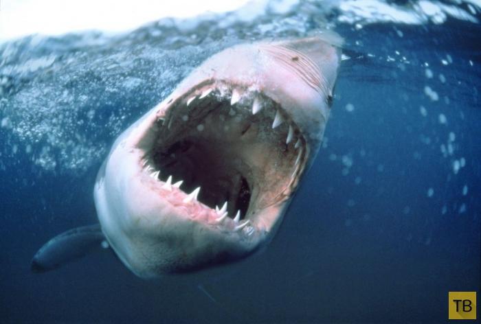 Топ 7: Самые жуткие в истории нападения акул (7 фото)