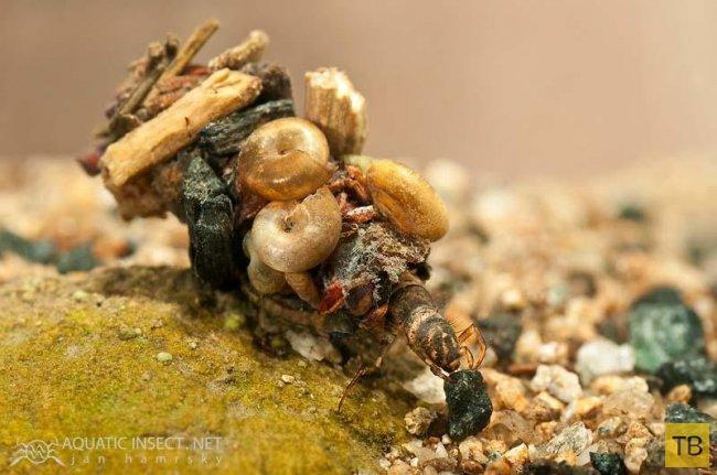 Удивительные жилища личинки ручейника (14 фото)