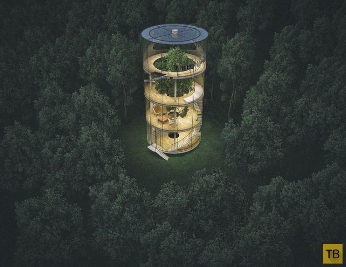 Необычный стеклянный дом в лесу (6 фото)