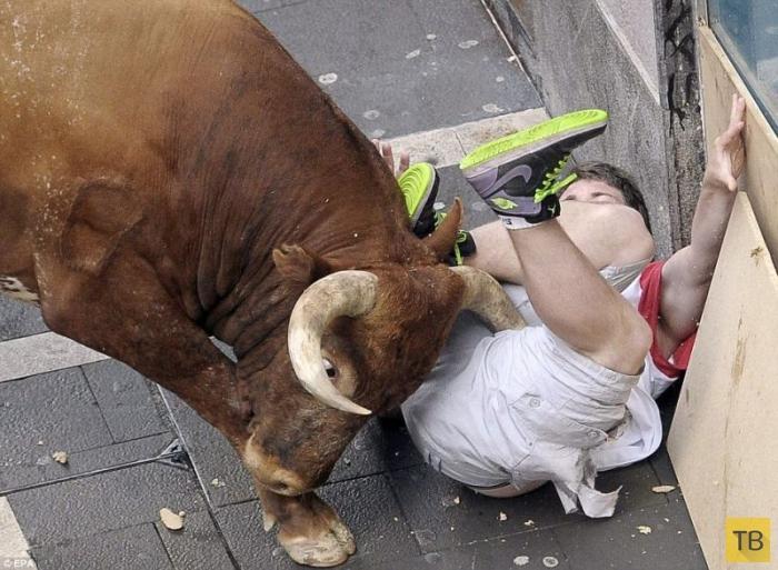 Австралиец Джейсон Гилберт попал под бычка (7 фото)