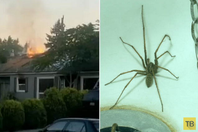 Хотел убить паука, спалил дом (5 фото + видео)