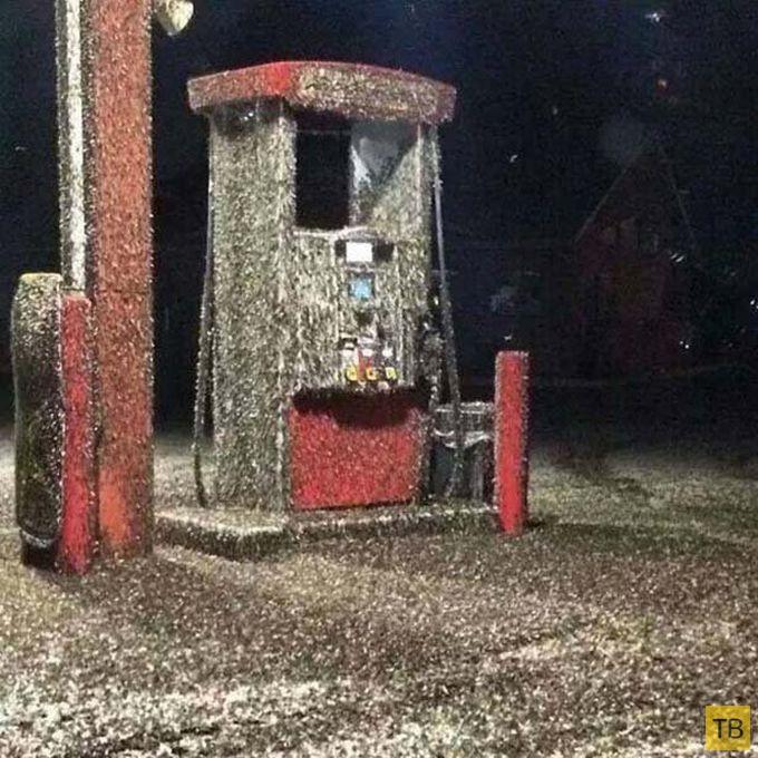 Муха-однодневка атаковала штат Висконсин (5 фото)